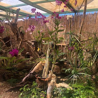 Orquídeas Sitio Litre